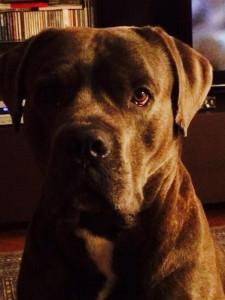 3° classificato Pelfie categoria cani: Chiara Besana