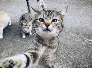 2° classificato Pelfie categoria gatti: Martina Vitale
