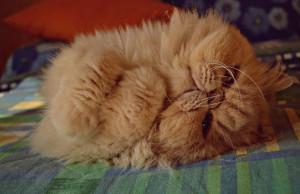 3° classificato Pelfie categoria gatti: Sara Pievani