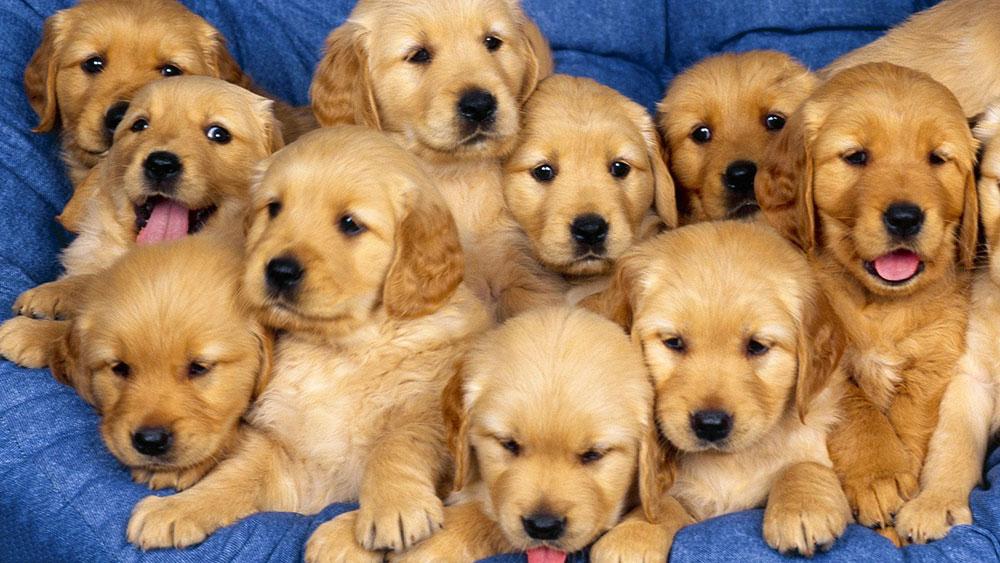 Contratto Di Vendita Cani E Altri Animali E Garanzia Avvocato Animali