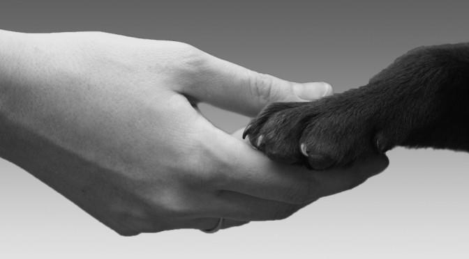 diritti-animali