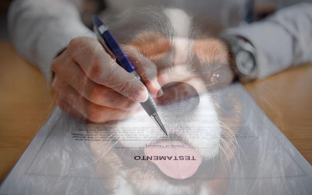 testamento per cane