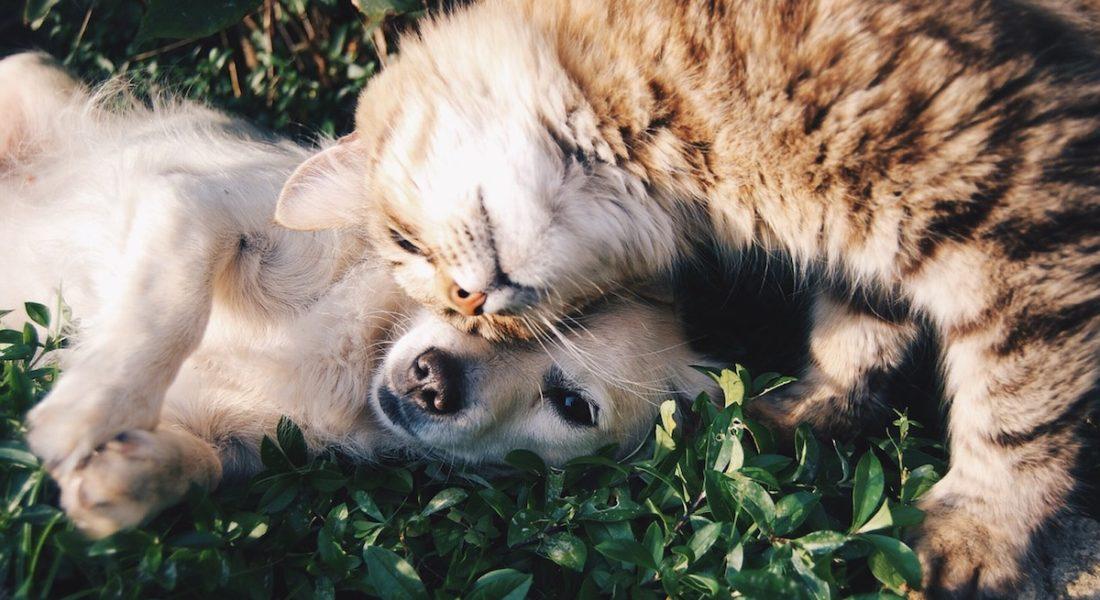 Affidamento animali separazione