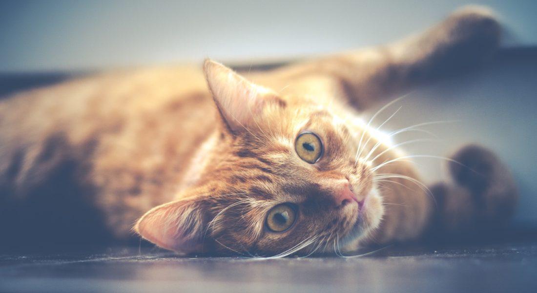 gatto ucciso