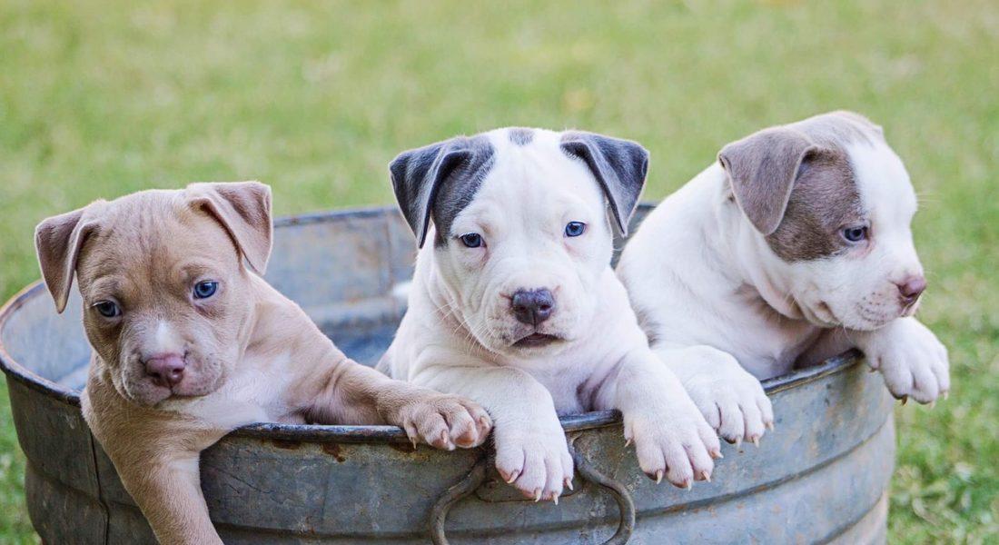 Gran Bretagna: niente più fabbriche di cuccioli