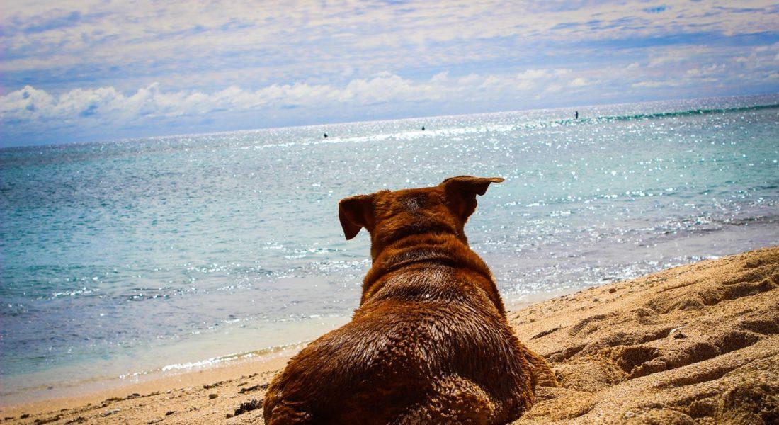 divieto dei cani in spiaggia