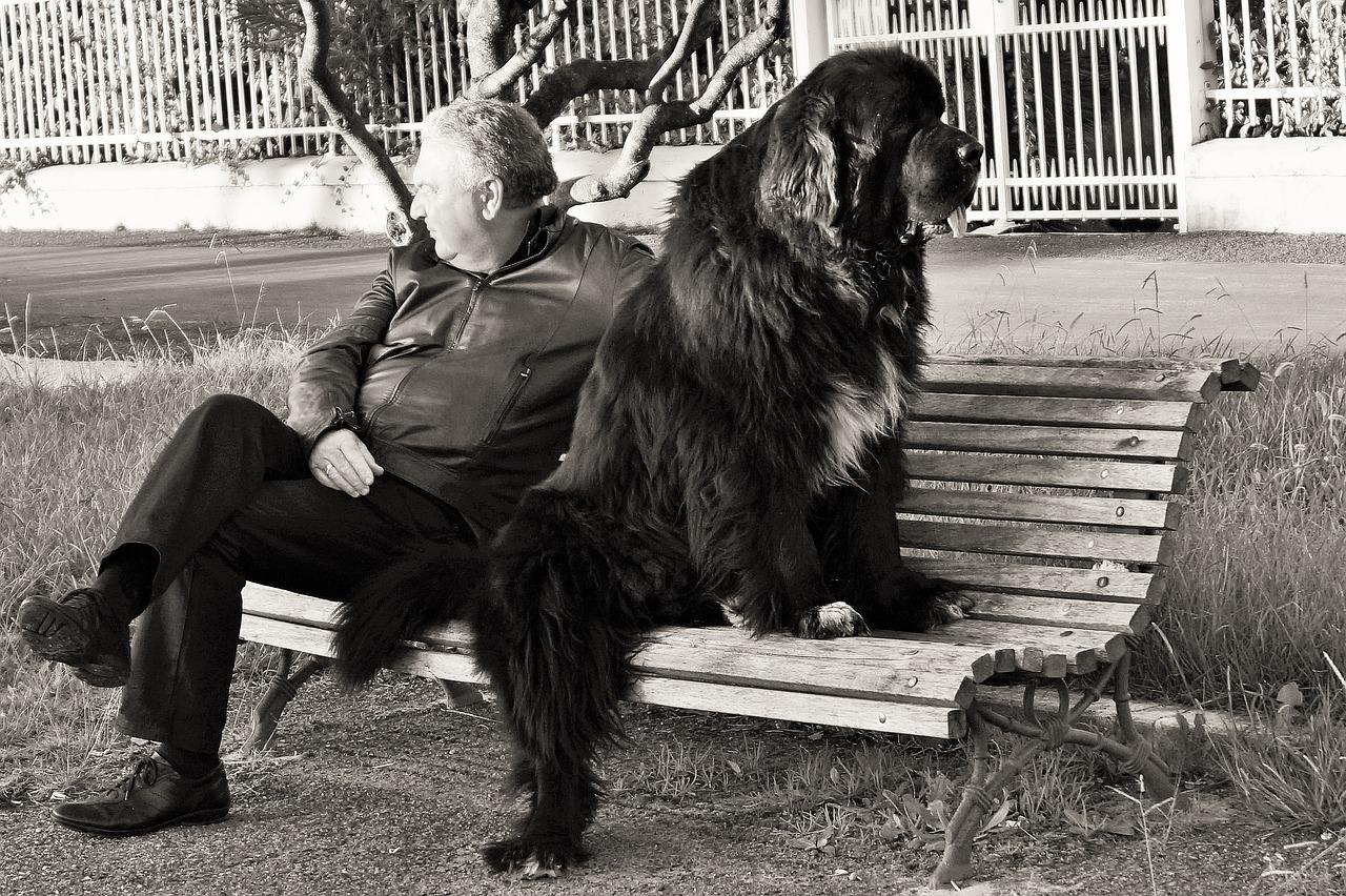 responsabilità del proprietario di cane