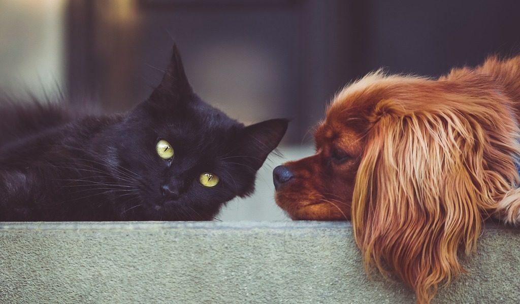 animali domestici a milano