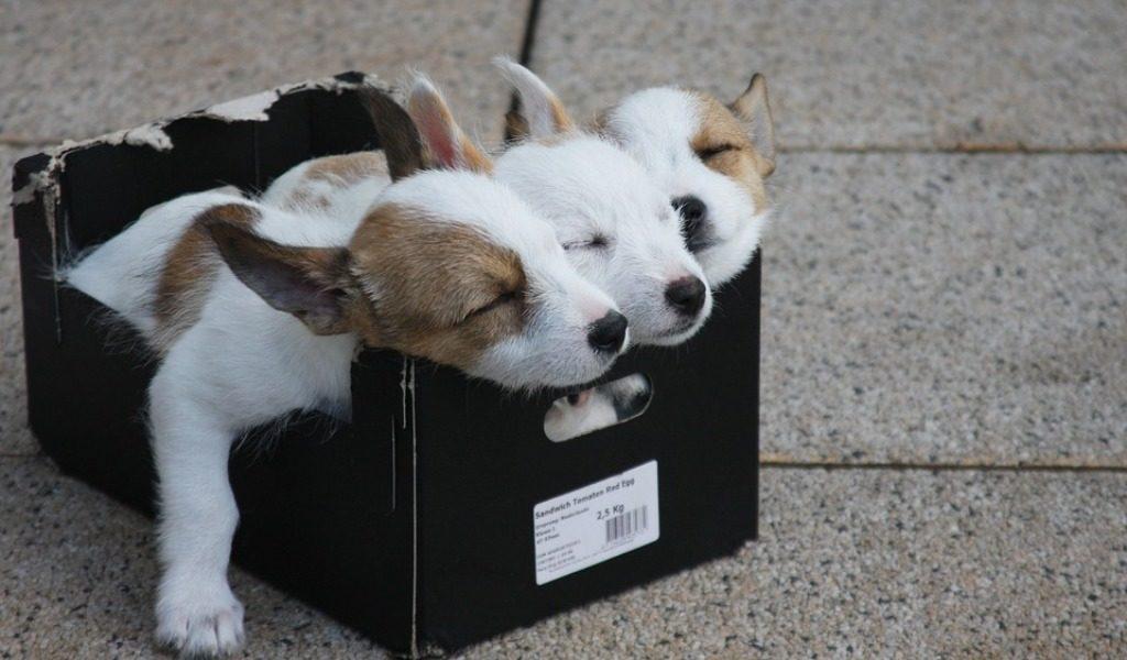 attenuanti generiche per imputato incensurato che abbandona dei cuccioli
