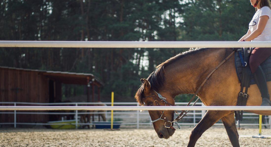 covid-19 ed equitazione