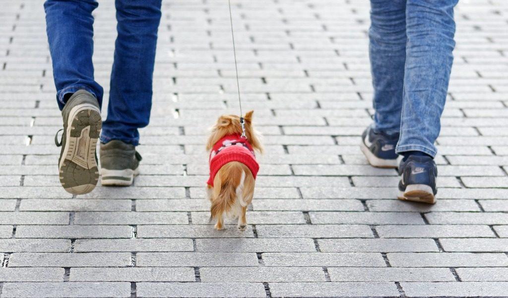 Animali domestici e Covid-19: le regole