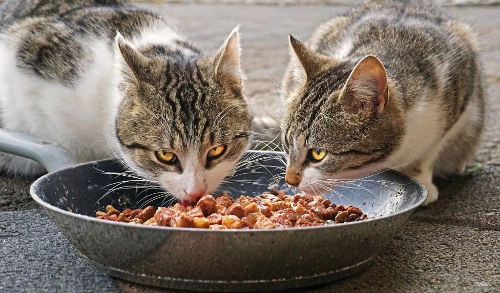 Alcuni comuni vietano l'acquisto di cibo per animali con i buoni spesa: le denuncia di Lav