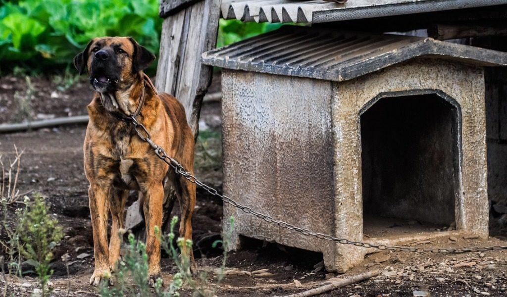 Condannata la padrona se il cane scappa dal cancello e morde un passante