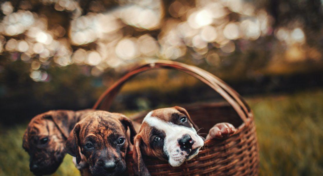 abbandono di cuccioli