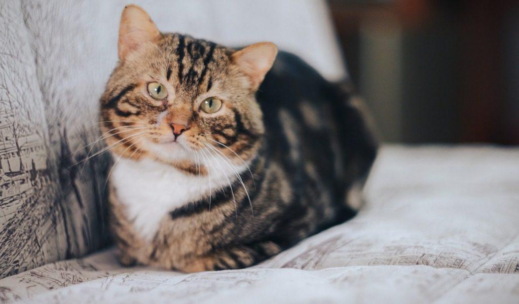 Se il gatto fa danni nella casa in affitto l'inquilino deve risarcire