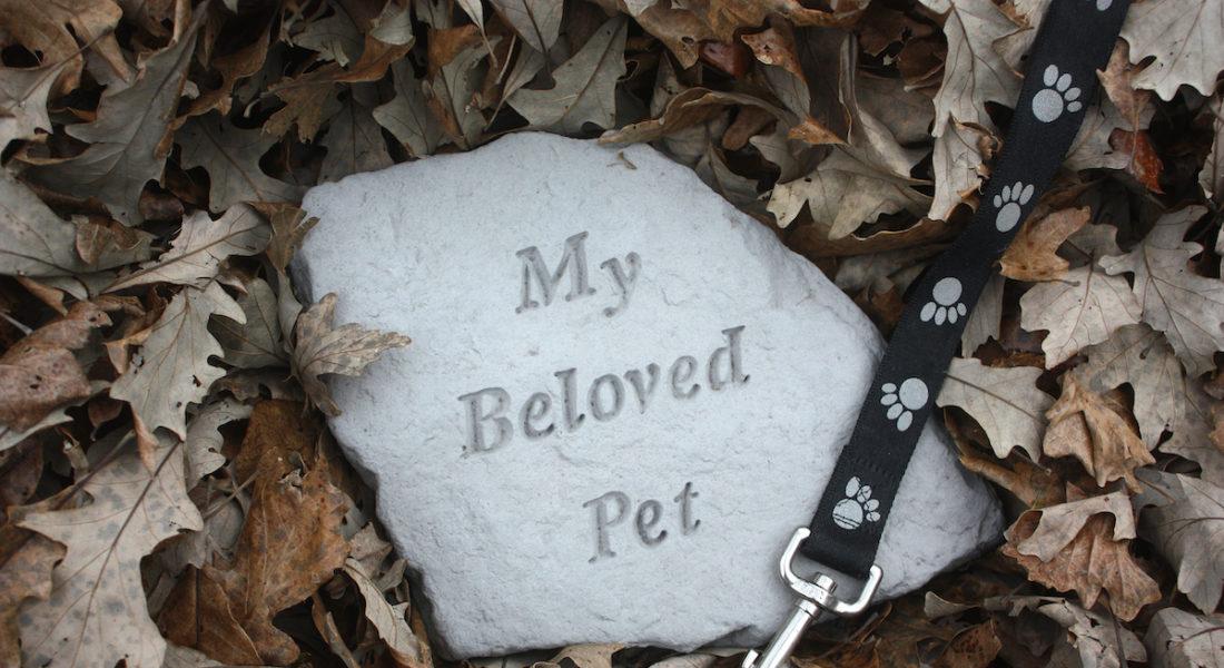 muore il cane