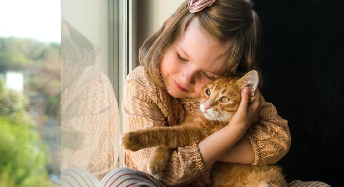 affidare gatti figli minori abbandono