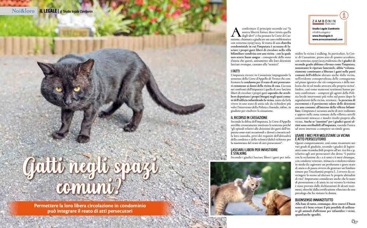 gatti in spazi comuni atti persecutori quattro zampe febbraio 2021