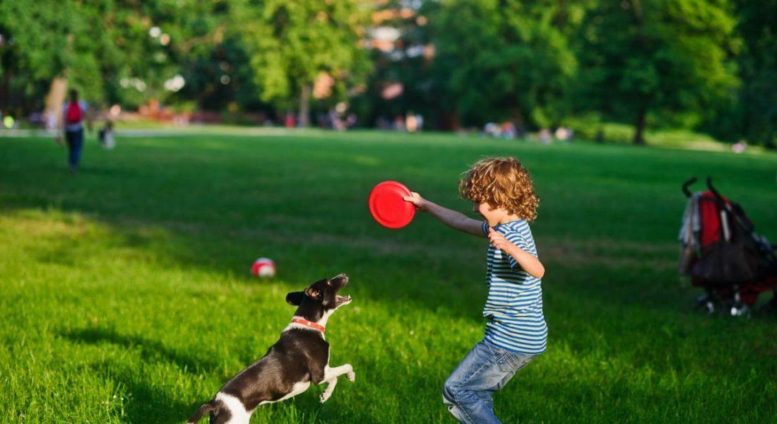 ordinanza comunale che vieta ai cani di entrare nei parchi