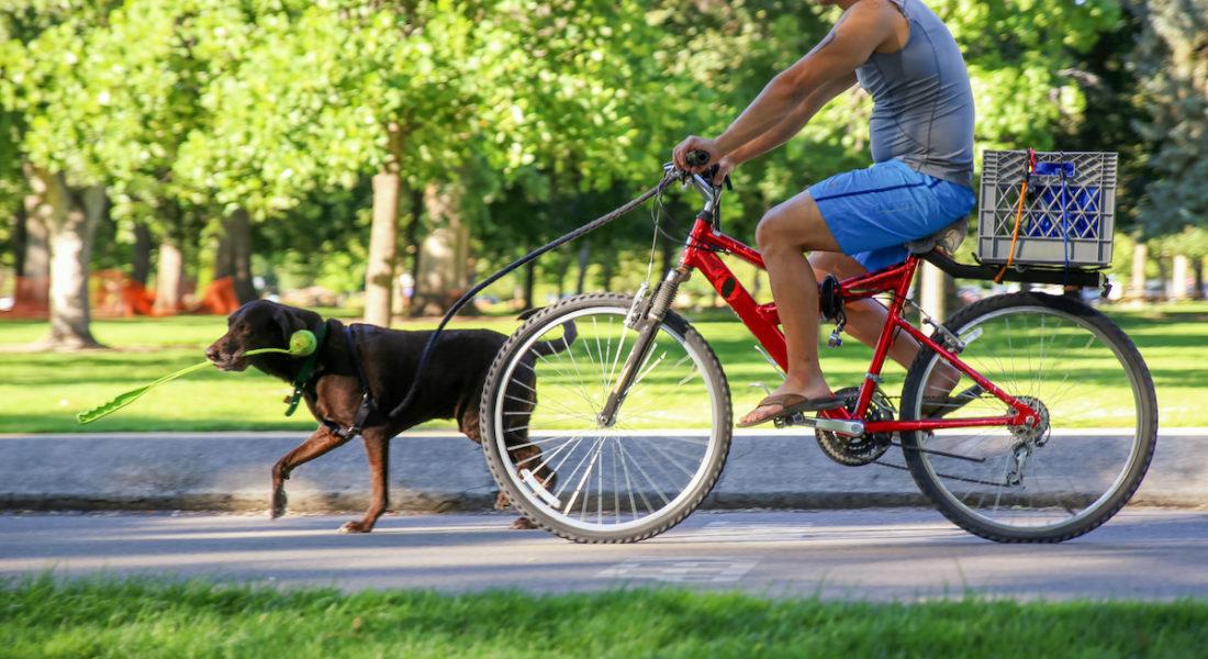portare a spasso il cane in bicicletta