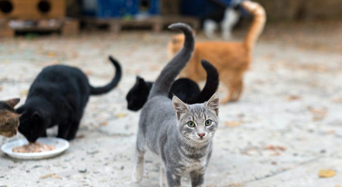 troppi gatti