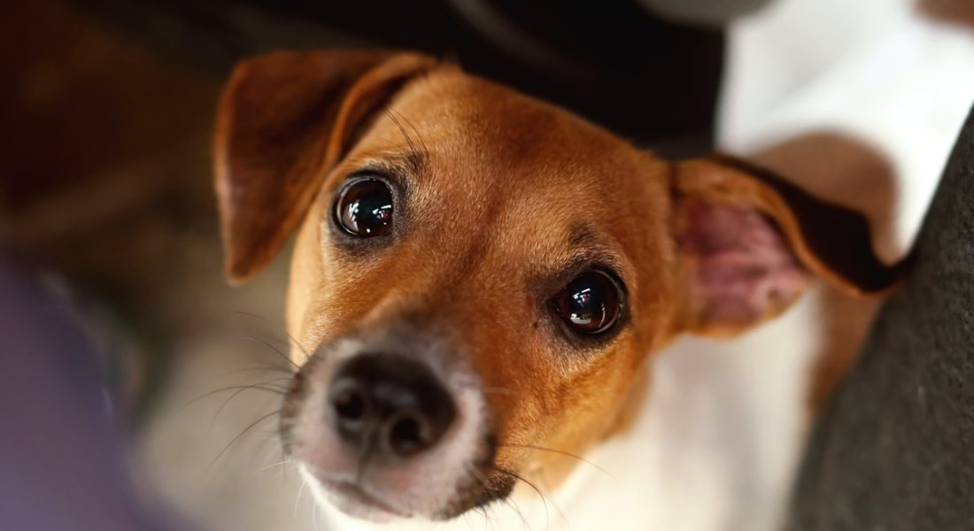 cane ucciso a colpi di forcone